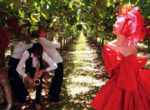 Mildura Jazz and Wine Festival for grey nomads