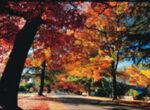 Bright Autumn Festival