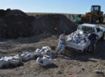 Grey nomads look for dinosaur bones
