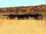 Grey nomads, station, Gascoyne
