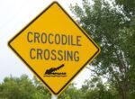 Crocodile threat to grey nomad motorists